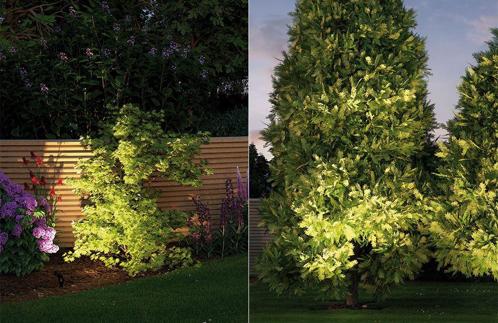 Busch- und Baumbeleuchtung